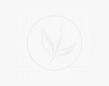 Fruchtende Becher-Eibe