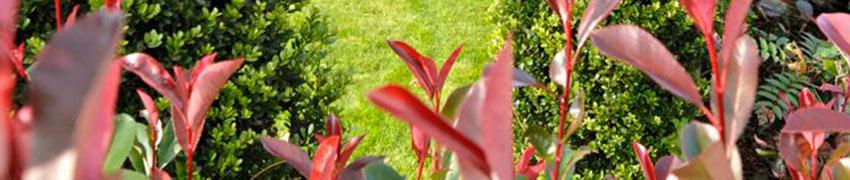 Artenvielfalt Immergrüne Heckenpflanzen