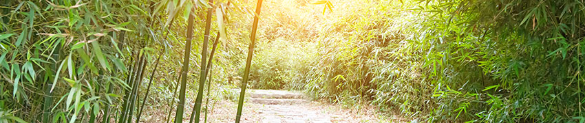 Bambussorten
