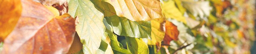 Pflanzen online aus den besten Krippen