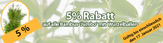 5% Rabatt auf alle Bambus Jumbo mit Wurzeballen