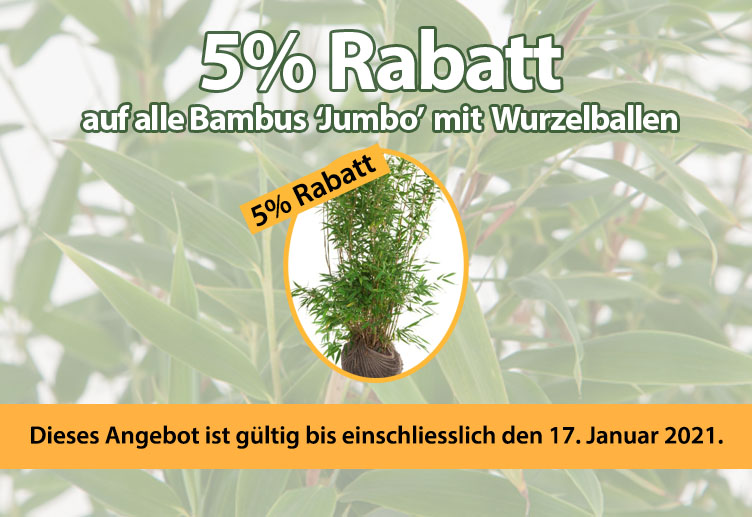 5% Rebatt auf alle Bambus Jumbo mit Wurzelballen