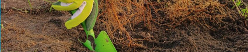 Heckenpflanzen Sonne
