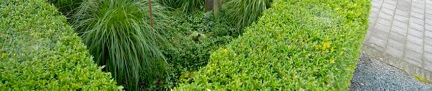 Heimische Heckenpflanzen