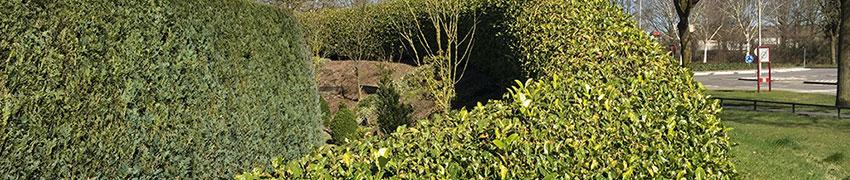 Schnellwachsende Heckenpflanzen finden